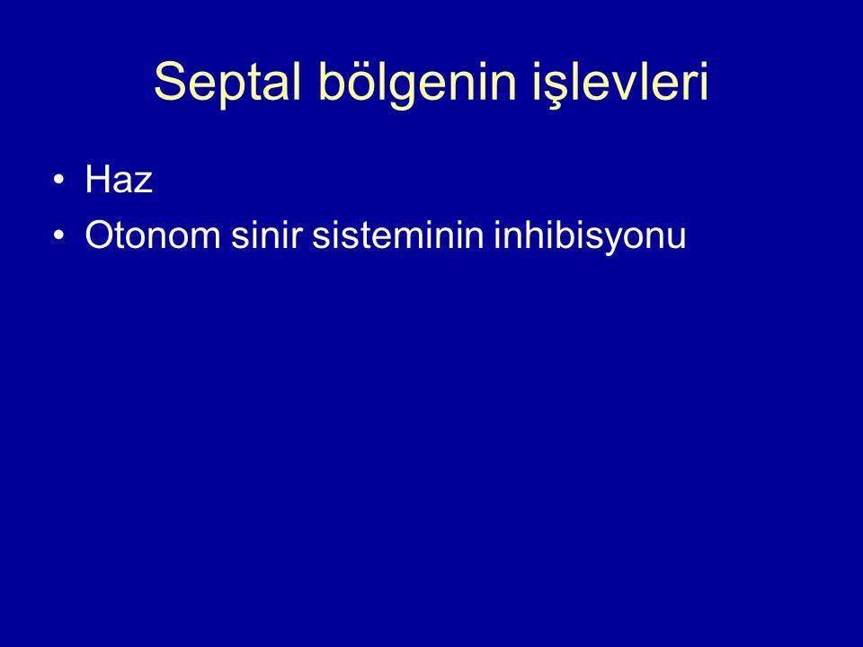 Septal bölgenin işlevleri