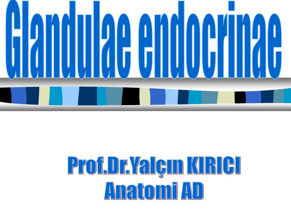 Glandulae endocrinae Prof.Dr.Yalçın KIRICI Anatomi AD