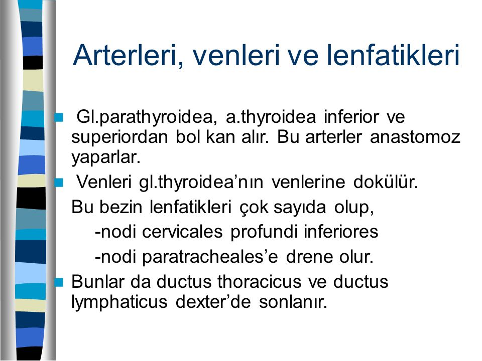 Arterleri, venleri ve lenfatikleri