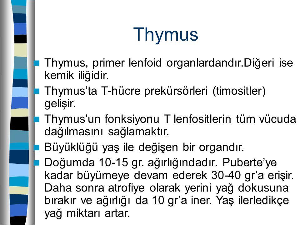 Thymus Thymus, primer lenfoid organlardandır.Diğeri ise kemik iliğidir. Thymus'ta T-hücre prekürsörleri (timositler) gelişir.
