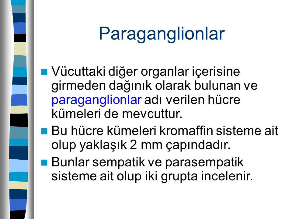 Paraganglionlar Vücuttaki diğer organlar içerisine girmeden dağınık olarak bulunan ve paraganglionlar adı verilen hücre kümeleri de mevcuttur.