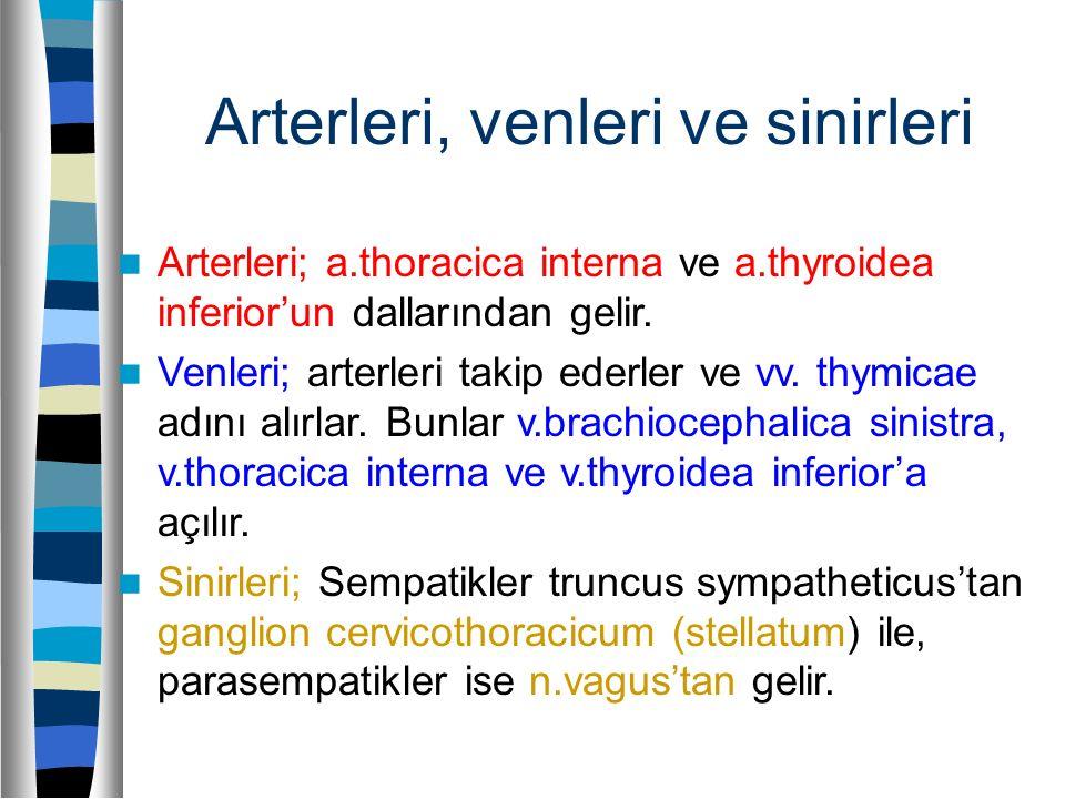 Arterleri, venleri ve sinirleri