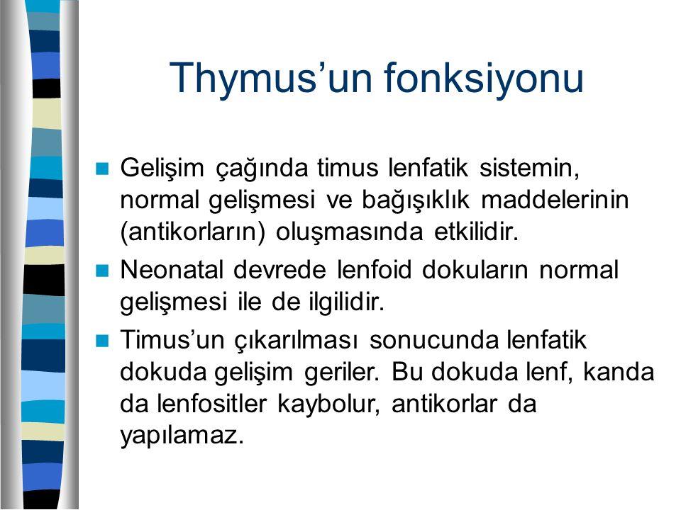 Thymus'un fonksiyonu Gelişim çağında timus lenfatik sistemin, normal gelişmesi ve bağışıklık maddelerinin (antikorların) oluşmasında etkilidir.