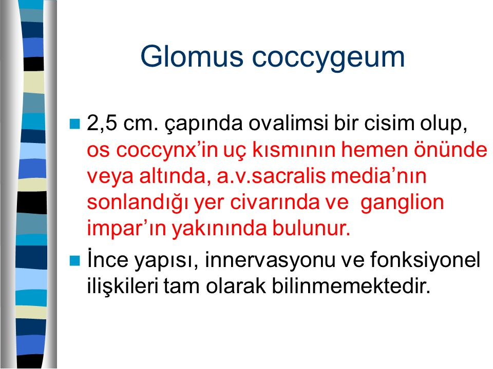 Glomus coccygeum