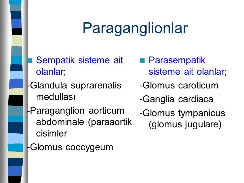 Paraganglionlar Sempatik sisteme ait olanlar;