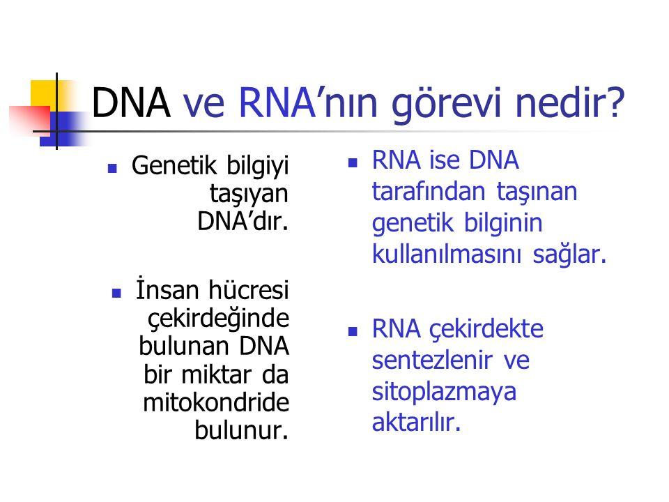 DNA ve RNA'nın görevi nedir