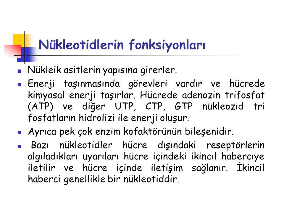 Nükleotidlerin fonksiyonları