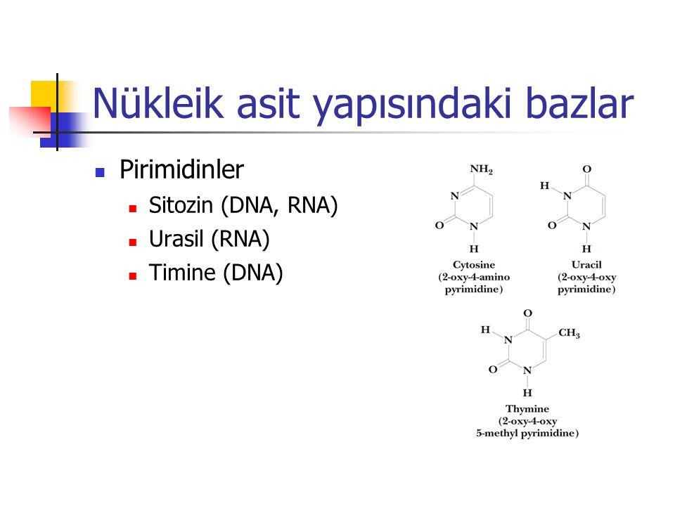 Nükleik asit yapısındaki bazlar