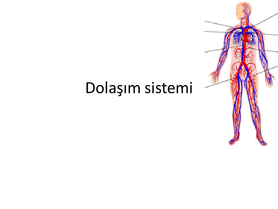 Dolaşım sistemi