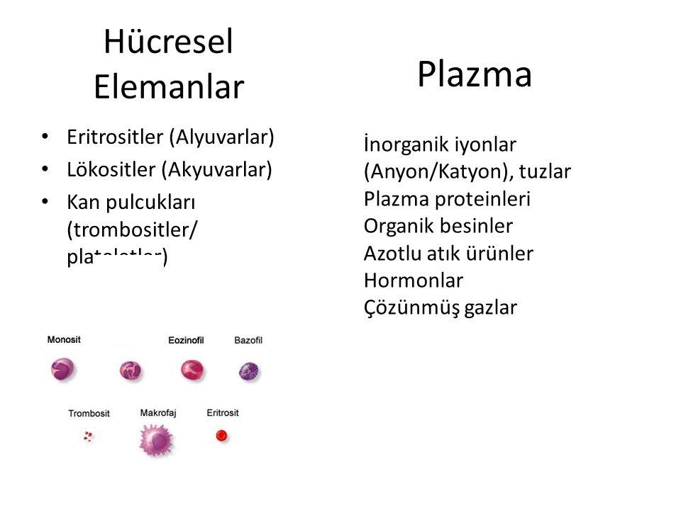 Plazma Hücresel Elemanlar Eritrositler (Alyuvarlar)