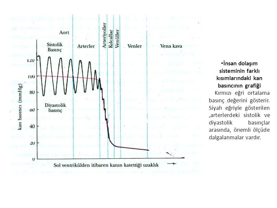İnsan dolaşım sisteminin farklı kısımlarındaki kan basıncının grafiği