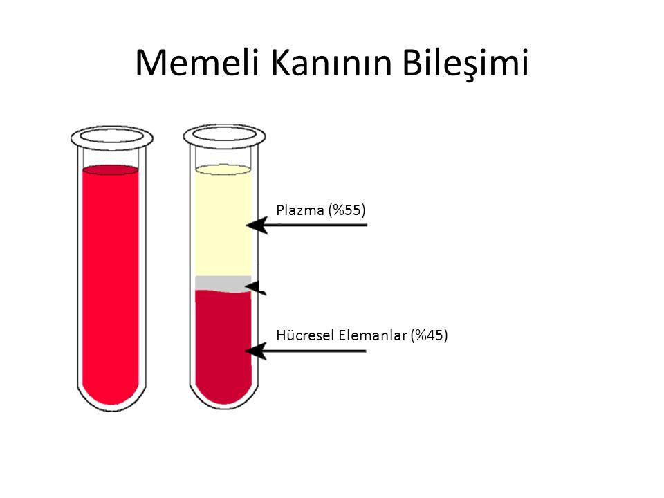 Memeli Kanının Bileşimi