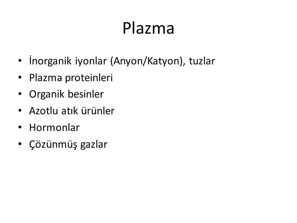 Plazma İnorganik iyonlar (Anyon/Katyon), tuzlar Plazma proteinleri
