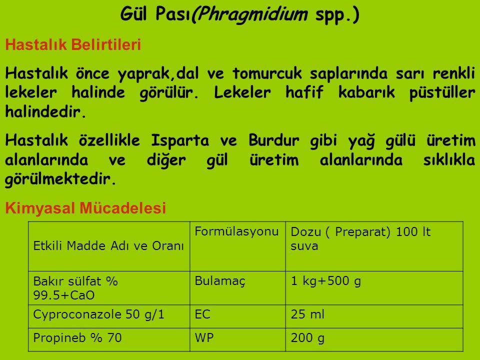 Gül Pası(Phragmidium spp.)