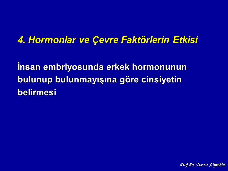 4. Hormonlar ve Çevre Faktörlerin Etkisi