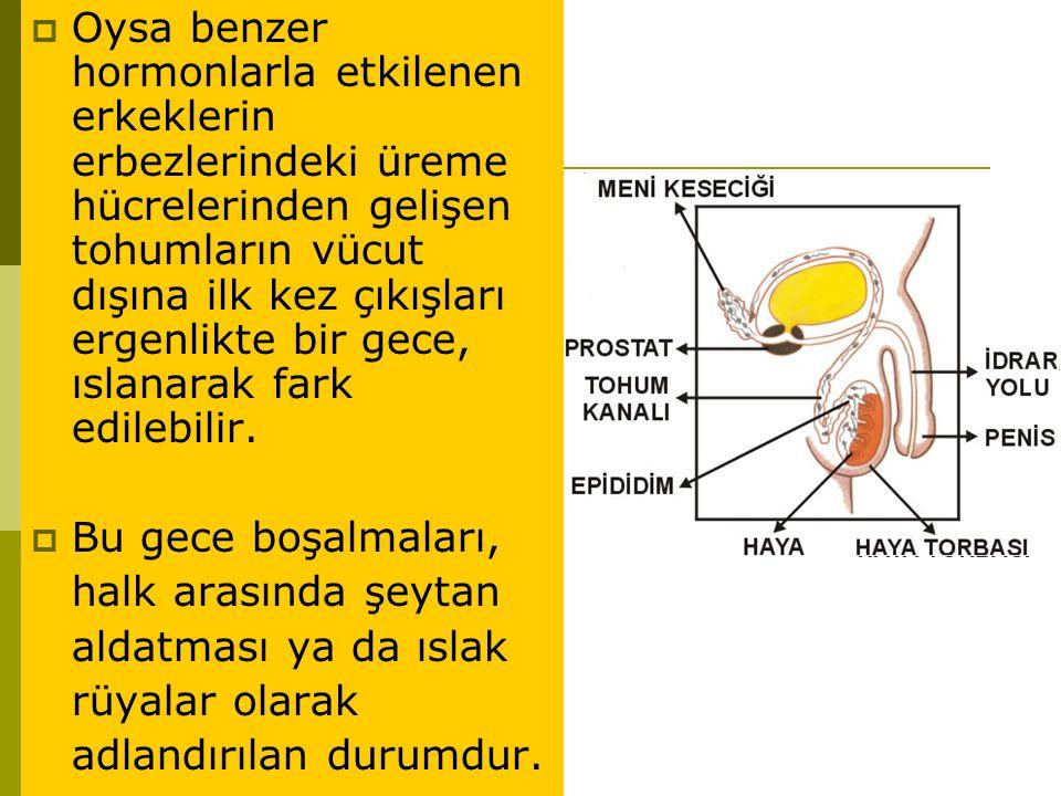 Oysa benzer hormonlarla etkilenen erkeklerin erbezlerindeki üreme hücrelerinden gelişen tohumların vücut dışına ilk kez çıkışları ergenlikte bir gece, ıslanarak fark edilebilir.