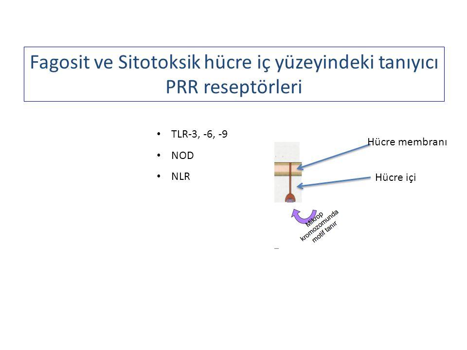 Fagosit ve Sitotoksik hücre iç yüzeyindeki tanıyıcı PRR reseptörleri