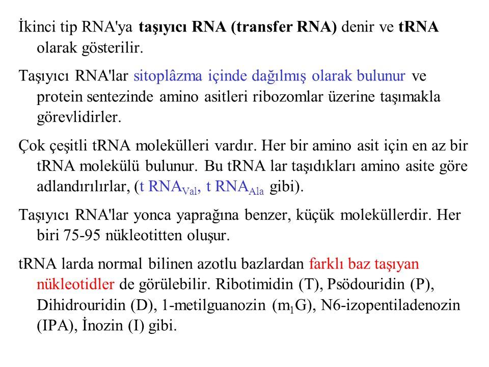İkinci tip RNA ya taşıyıcı RNA (transfer RNA) denir ve tRNA olarak gösterilir.