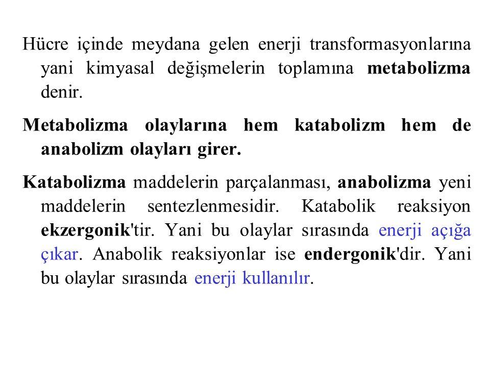 Hücre içinde meydana gelen enerji transformasyonlarına yani kimyasal değişmelerin toplamına metabolizma denir.