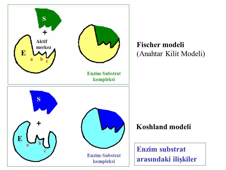 Enzim-Substrat kompleksi Enzim-Substrat kompleksi