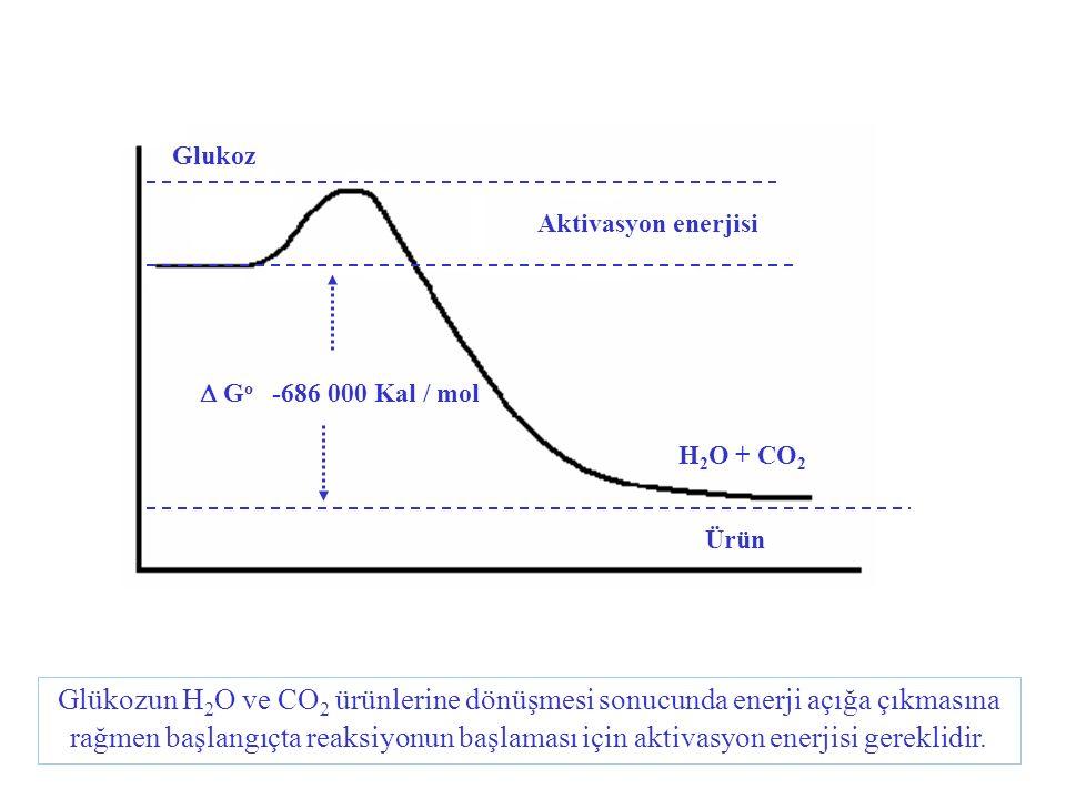 Glukoz Aktivasyon enerjisi. D Go -686 000 Kal / mol. H2O + CO2. Ürün.