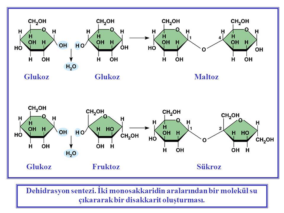 Glukoz Glukoz Maltoz Glukoz Fruktoz Sükroz.