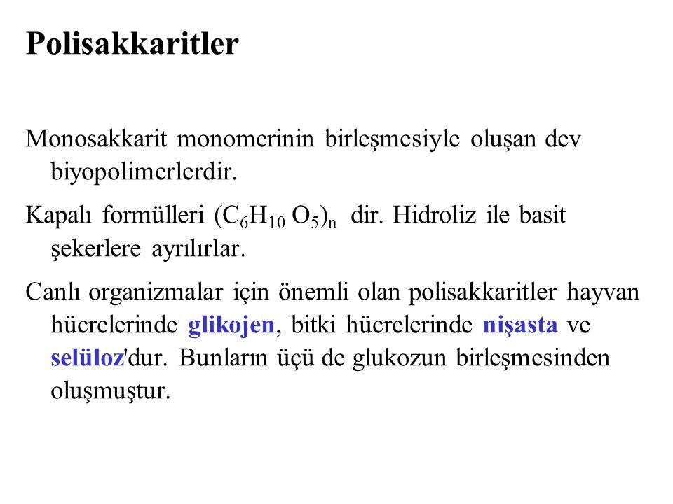 Polisakkaritler Monosakkarit monomerinin birleşmesiyle oluşan dev biyopolimerlerdir.