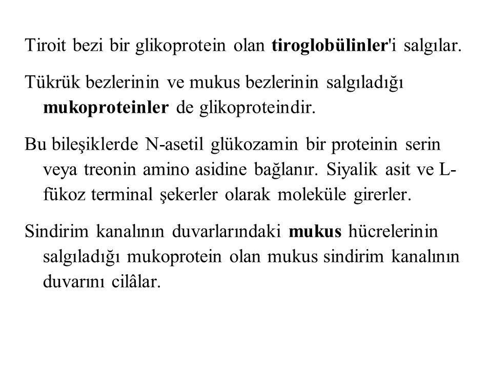 Tiroit bezi bir glikoprotein olan tiroglobülinler i salgılar.