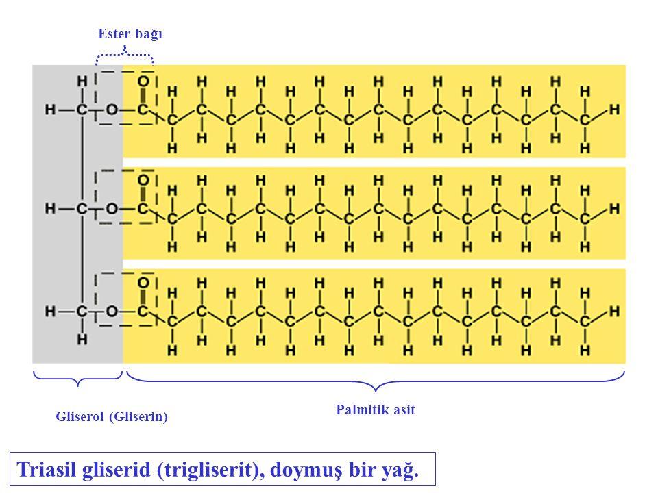 Triasil gliserid (trigliserit), doymuş bir yağ.