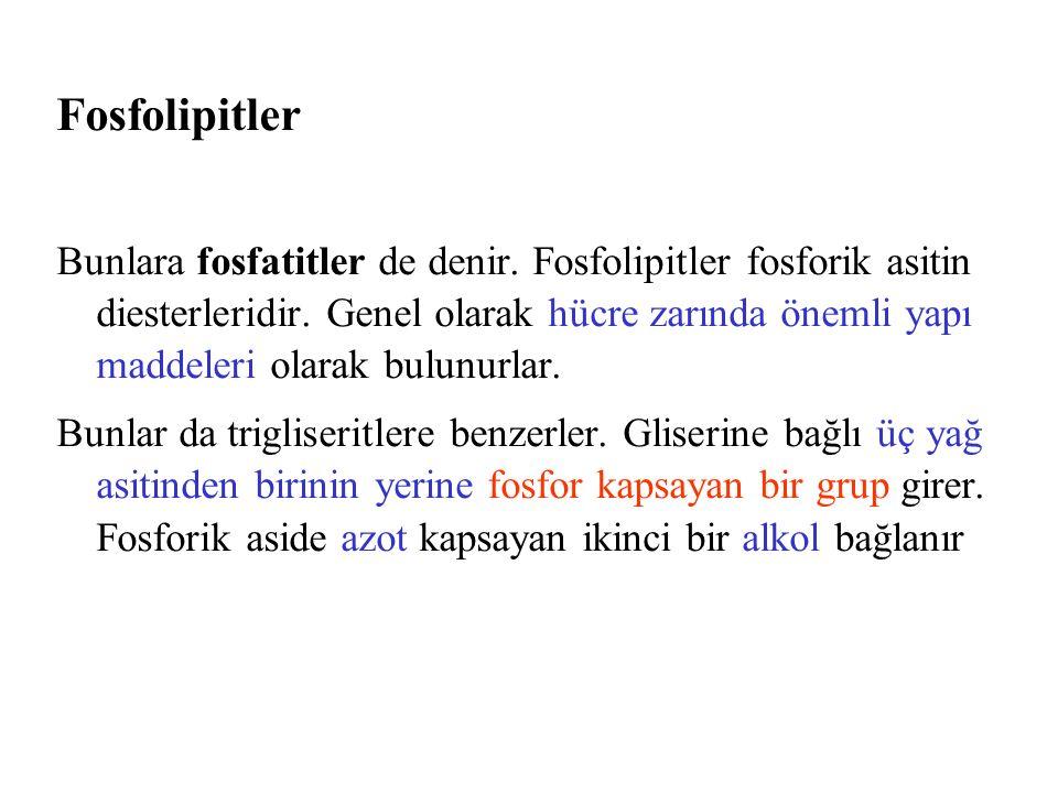 Fosfolipitler