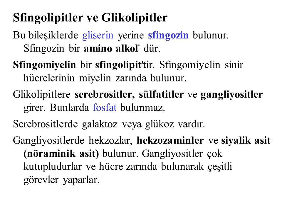 Sfingolipitler ve Glikolipitler