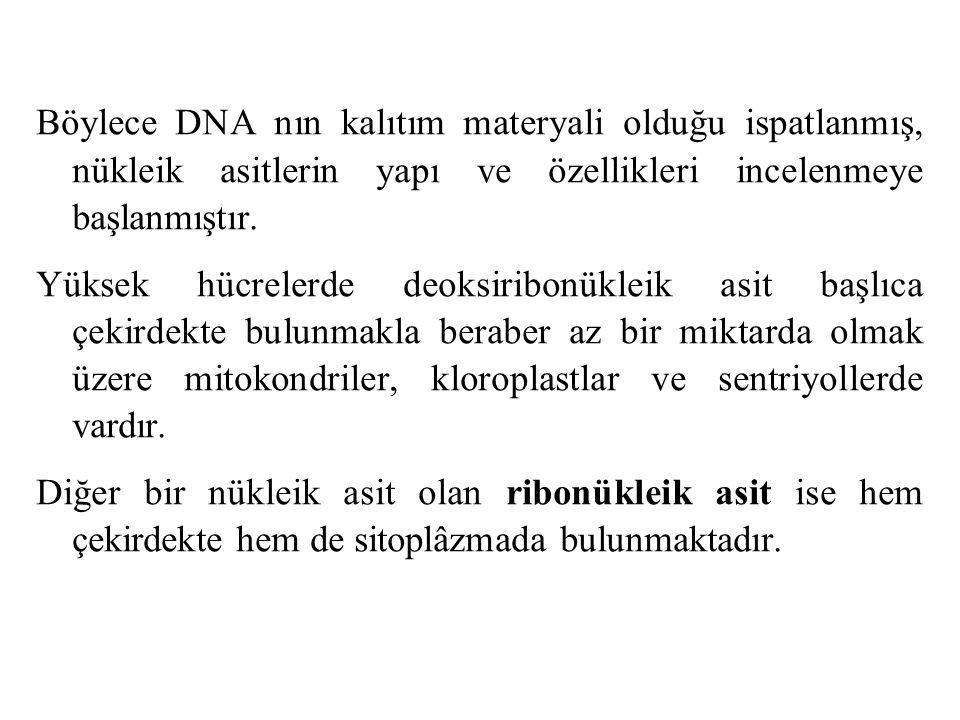 Böylece DNA nın kalıtım materyali olduğu ispatlanmış, nükleik asitlerin yapı ve özellikleri incelenmeye başlanmıştır.