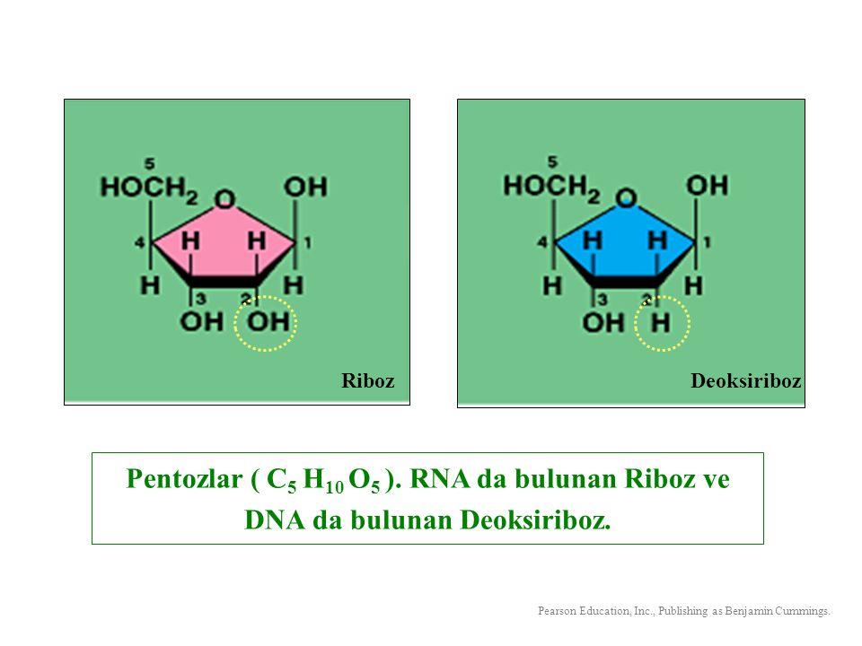 Riboz Deoksiriboz. Pentozlar ( C5 H10 O5 ). RNA da bulunan Riboz ve DNA da bulunan Deoksiriboz.