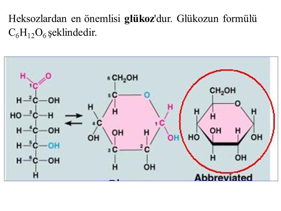 Heksozlardan en önemlisi glükoz dur