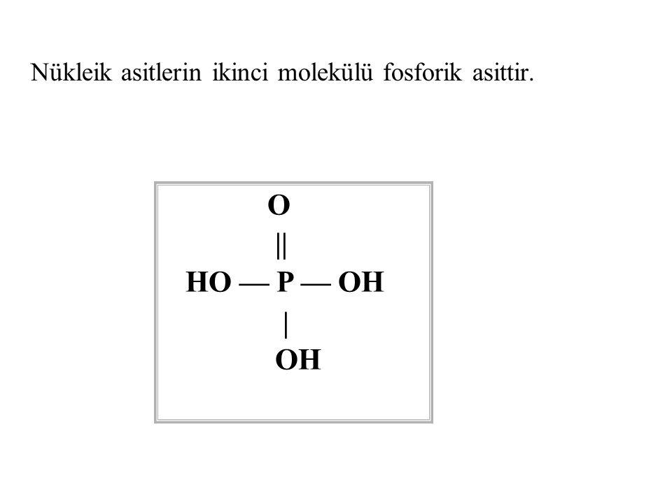 Nükleik asitlerin ikinci molekülü fosforik asittir.