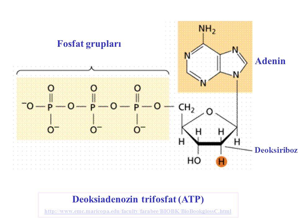 Fosfat grupları Adenin