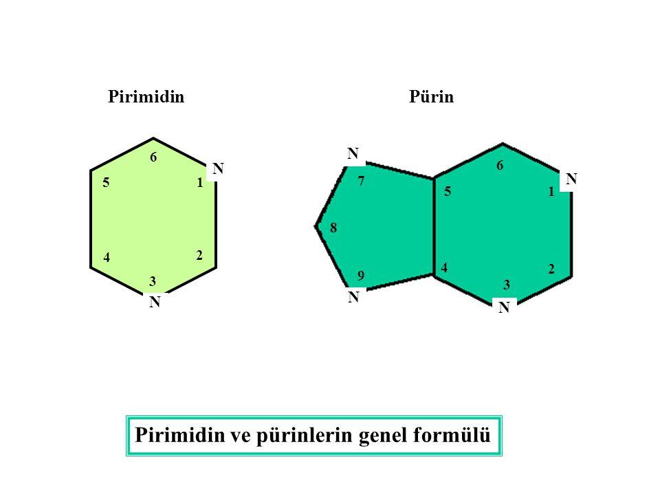 Pirimidin ve pürinlerin genel formülü