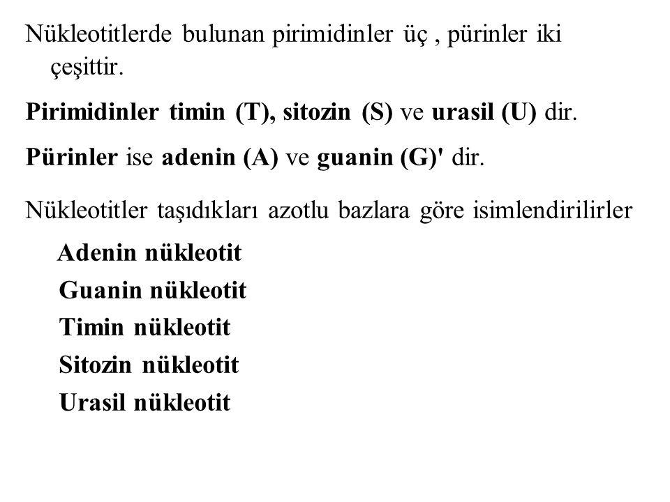 Nükleotitlerde bulunan pirimidinler üç , pürinler iki çeşittir.