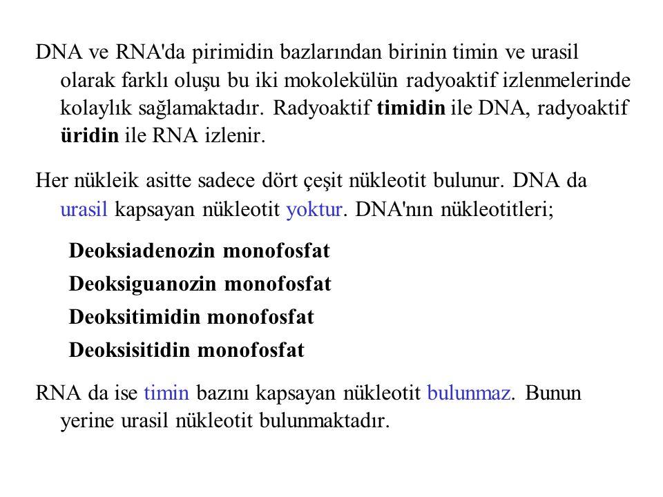 DNA ve RNA da pirimidin bazlarından birinin timin ve urasil olarak farklı oluşu bu iki mokolekülün radyoaktif izlenmelerinde kolaylık sağlamaktadır. Radyoaktif timidin ile DNA, radyoaktif üridin ile RNA izlenir.