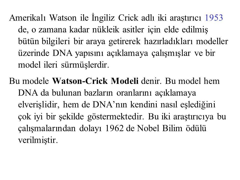 Amerikalı Watson ile İngiliz Crick adlı iki araştırıcı 1953 de, o zamana kadar nükleik asitler için elde edilmiş bütün bilgileri bir araya getirerek hazırladıkları modeller üzerinde DNA yapısını açıklamaya çalışmışlar ve bir model ileri sürmüşlerdir.