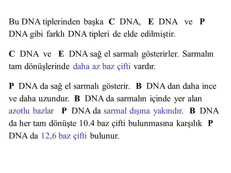 Bu DNA tiplerinden başka C DNA, E DNA ve P DNA gibi farklı DNA tipleri de elde edilmiştir.