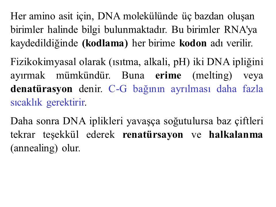 Her amino asit için, DNA molekülünde üç bazdan oluşan birimler halinde bilgi bulunmaktadır. Bu birimler RNA ya kaydedildiğinde (kodlama) her birime kodon adı verilir.