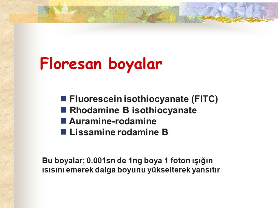 Floresan boyalar  Fluorescein isothiocyanate (FITC)