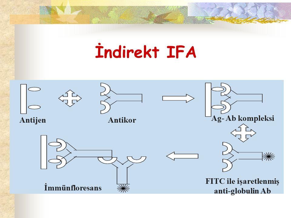 FITC ile işaretlenmiş anti-globulin Ab