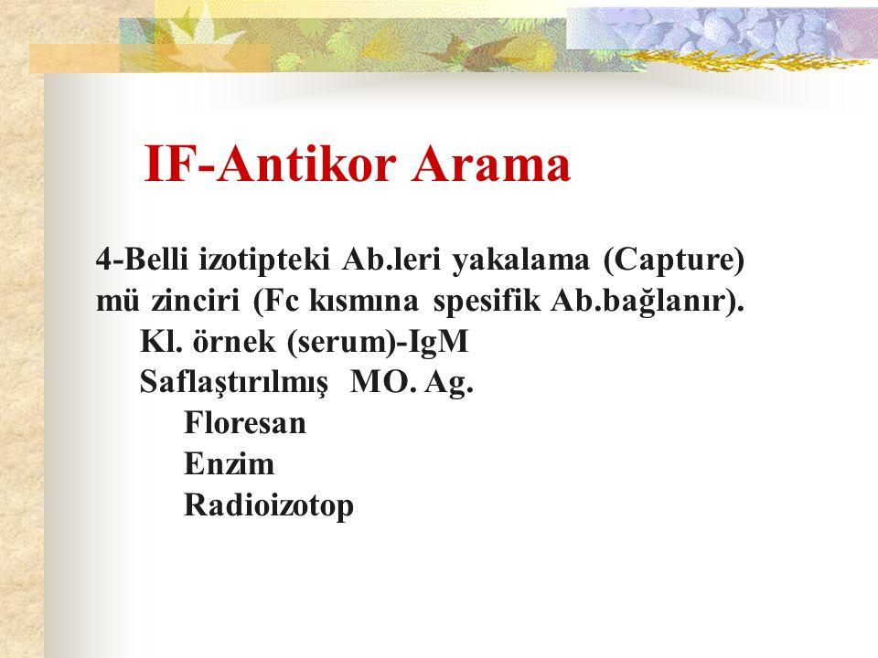 IF-Antikor Arama 4-Belli izotipteki Ab.leri yakalama (Capture)