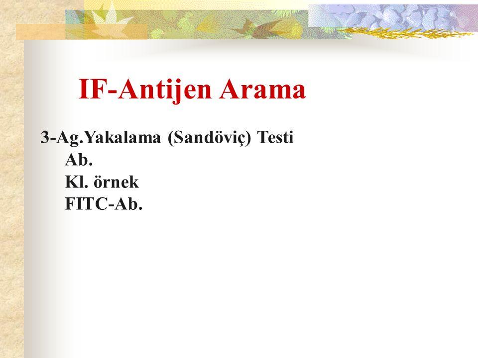 IF-Antijen Arama 3-Ag.Yakalama (Sandöviç) Testi Ab. Kl. örnek FITC-Ab.