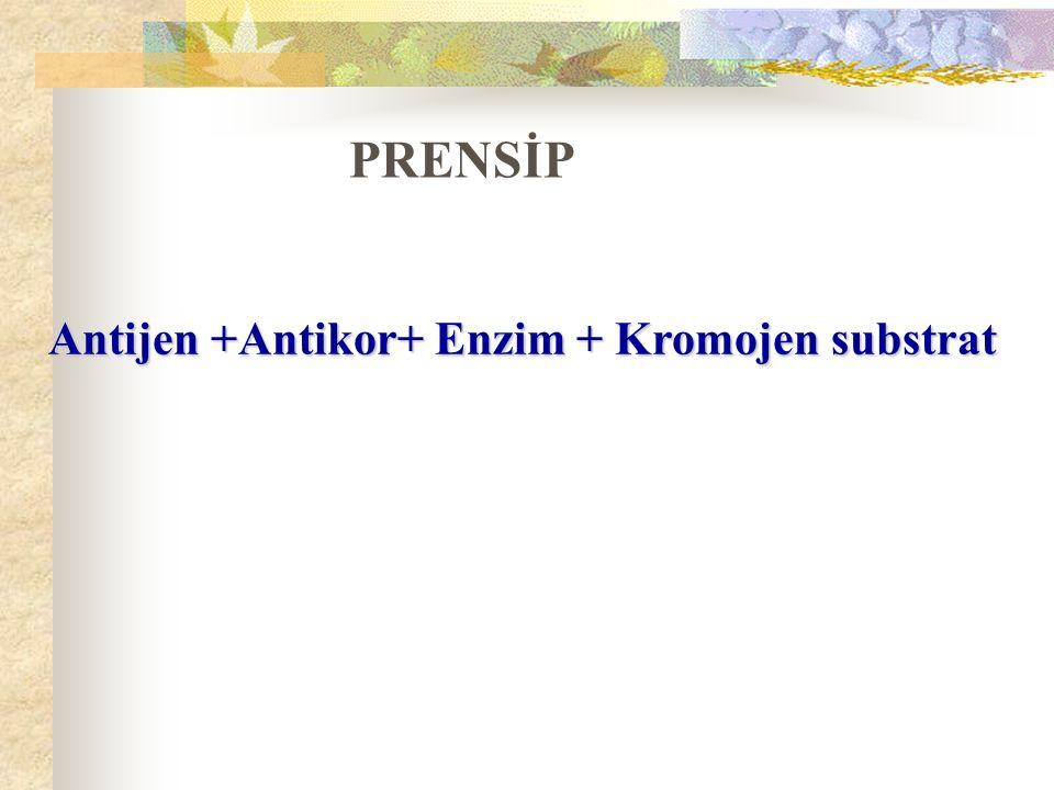 Antijen +Antikor+ Enzim + Kromojen substrat