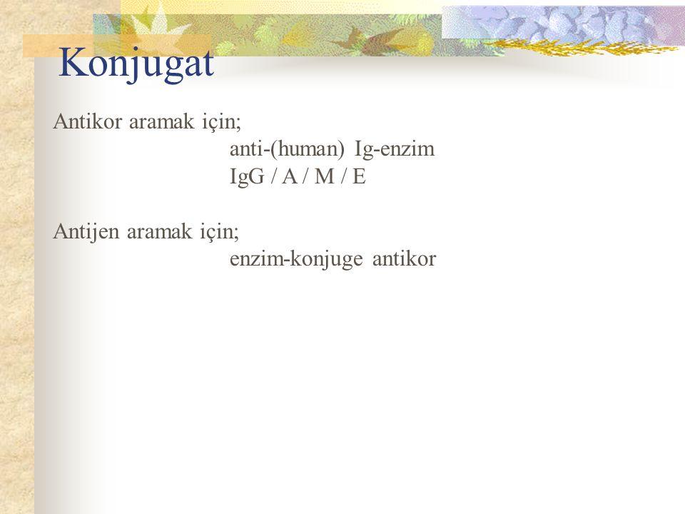 Konjugat Antikor aramak için; anti-(human) Ig-enzim IgG / A / M / E