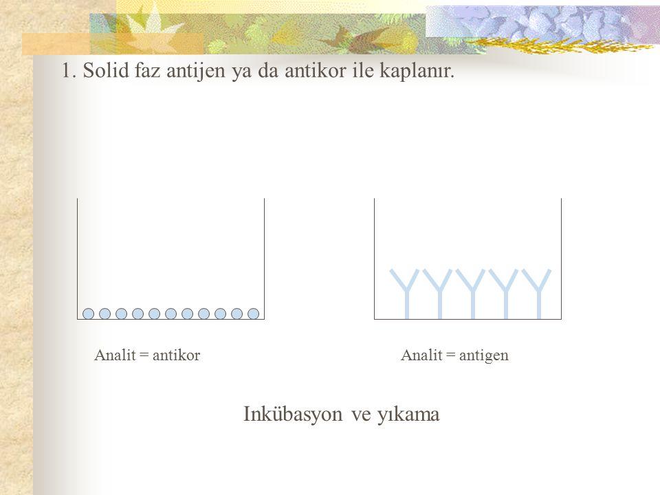 1. Solid faz antijen ya da antikor ile kaplanır.