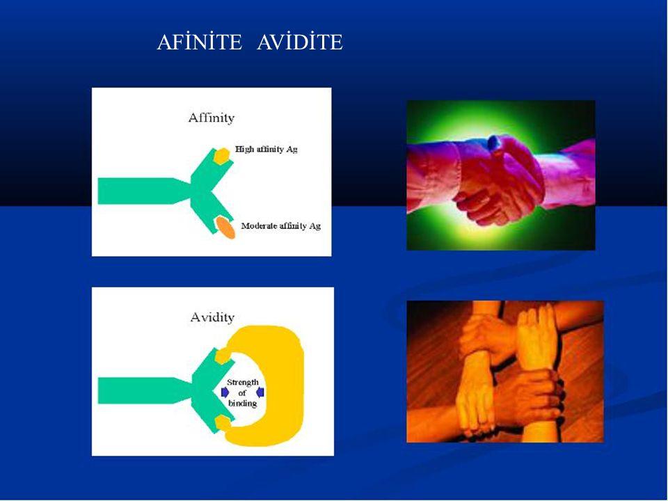 AFİNİTE AVİDİTE Afinite - Avidite